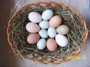 jajka zielononóżki